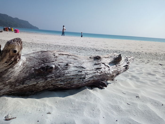 Driftwood on beach against clear sky