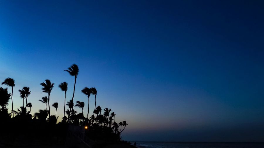 Sky Beauty In Nature Plant Tree Scenics - Nature Palm Tree Tranquility Copy Space Silhouette Water Growth Nature Tropical Climate Tranquil Scene Sea No People