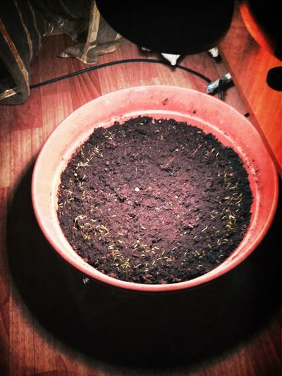 Dill Sprouted:)