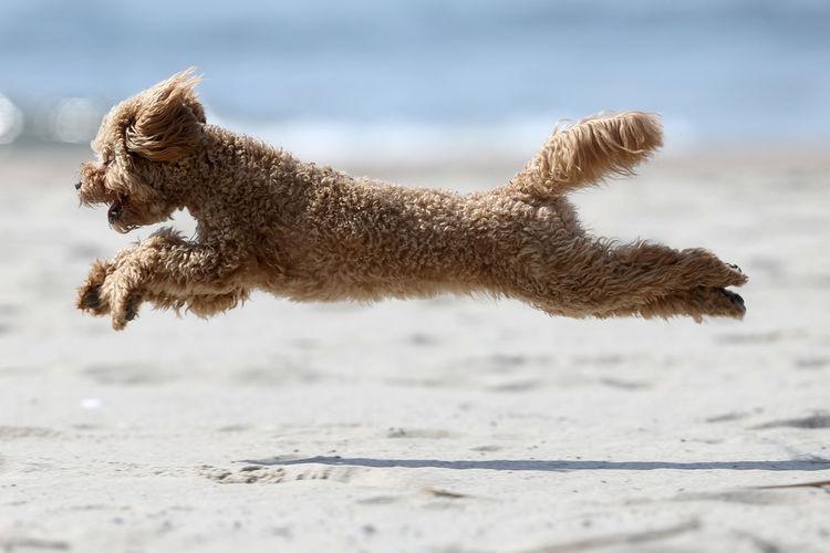 Close-up of dog running on field