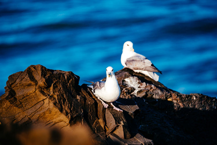 Seagulls on rock formation