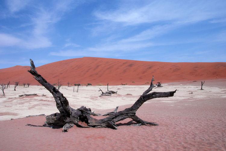 Dead tree on sand dune in desert against blue sky