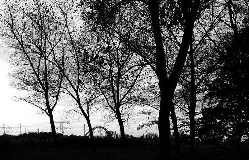 trees EyeEm Selects Bridge Tree Branch Silhouette Tree Trunk Sky