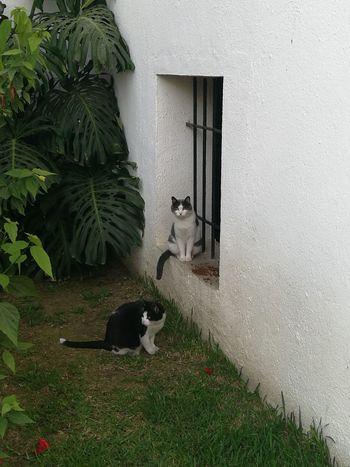 No People Day Outdoors Animal Themes Cats Of EyeEm Pets Gatos😻 Gatos En La Ventana