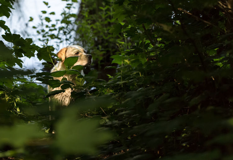 Out of the dark Animal Beauty In Nature Darkness And Light Dog Forest Labrador Leaf Looking To The Other Side Nature Nature_collection No People Pet Trees
