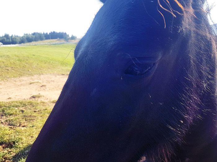 Sad donkey eye