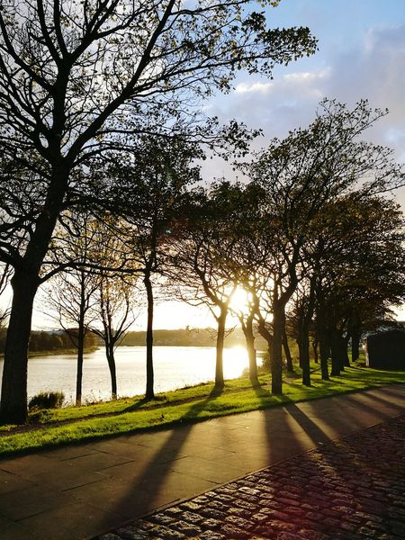 Sunset Tree Water Outdoors The Way Forward Sky Nature No People Tranquility Beauty In Nature River Riverside Path Pathway