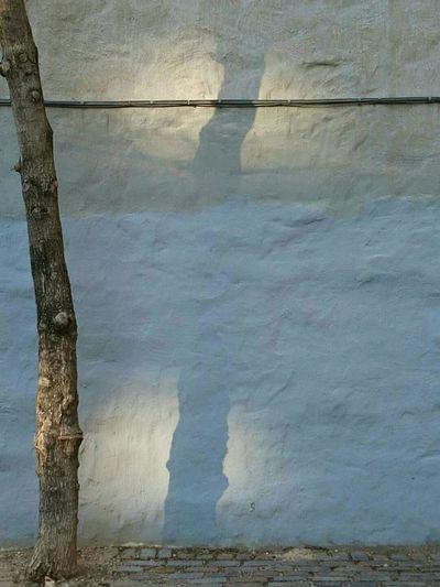Illusion Phantom Shadow Partial Shadow Tree And Shadow Rêverie