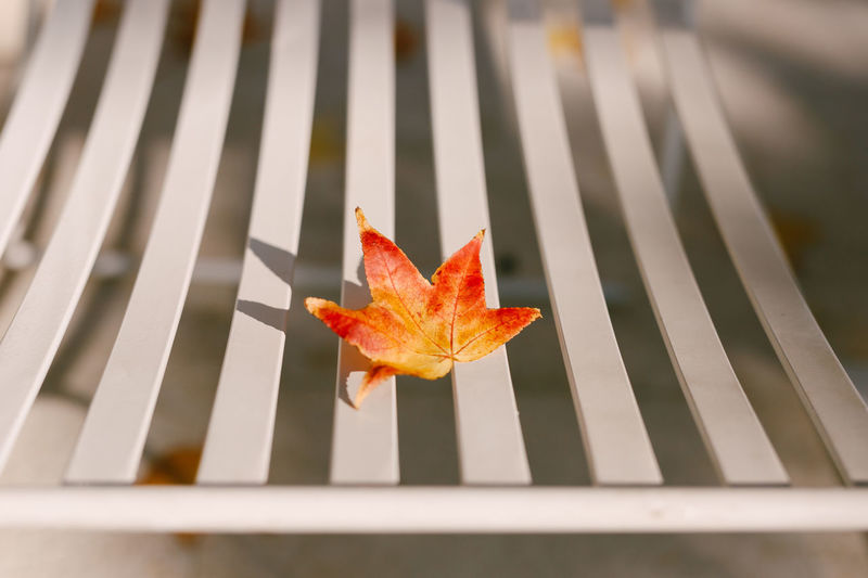 High angle view of maple leaf on metal