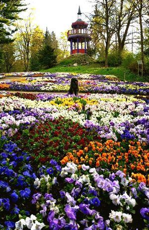 Bentjesgosaugustin Gos D'atura Beauty #flower #spring #happiness Dog Walking I Love My Dog Landscape Nature Dog Mydog Ilovemydog
