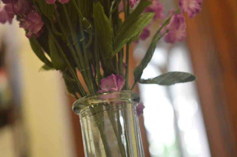 Beginnings Close-up Flower Focus On Foreground Fragility Freshness Indoors  Leaf New Life No People Plant Purple Flowers Selective Focus Springtime Stem Still Life Table Vase