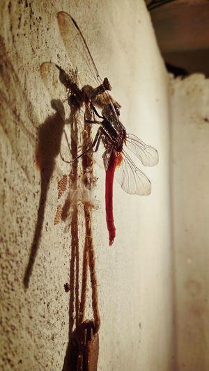 Redminote3shot Dragonfly Wingpattern Hdshots EyeEmNewHere Break The Mold
