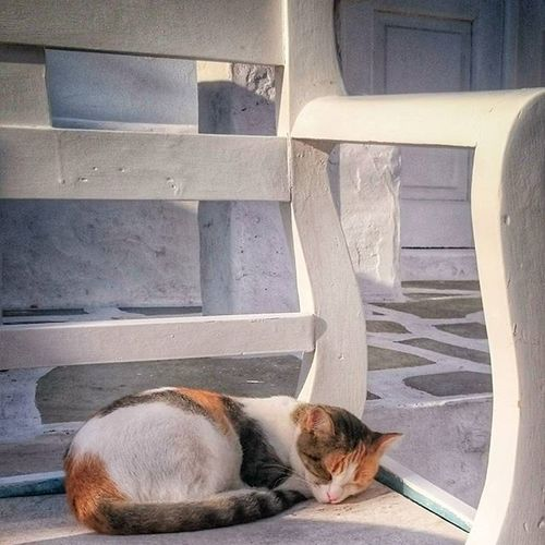 NAOUSSA, 7.0 AM. ASLEEP Naoussa Paros Paro Greece2015 Greecestagram Greekislands Cyclades_islands Cyclades Cat Catofgreece Catoftheday Enjoy Picoftheday Photoofgreece Photooftheday Summer Cats Catsofinstagram Morning Wakeup Peace Relax