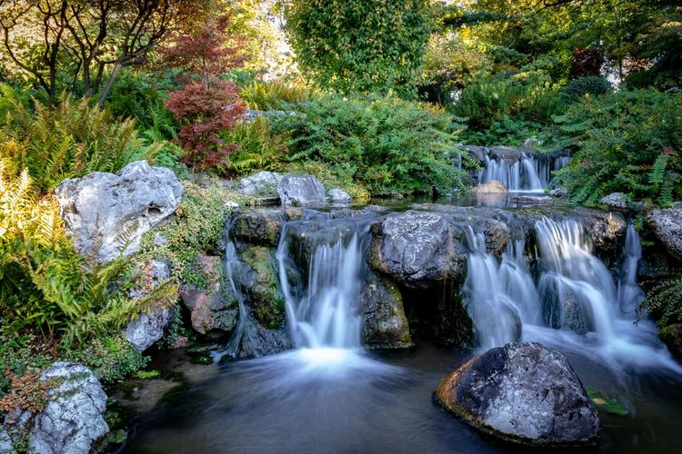 Japan Garden in Vienna Water Beauty In Nature Motion Plant Tree Waterfall Nature Long Exposure Rock Rock - Object Outdoors EyeEmNewHere