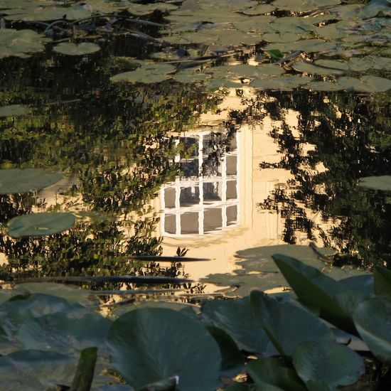 Czech Republic Waterlily Architecture Building Exterior Day House Lake No People Outdoors Reflection Sunlight Water Water Surface Window
