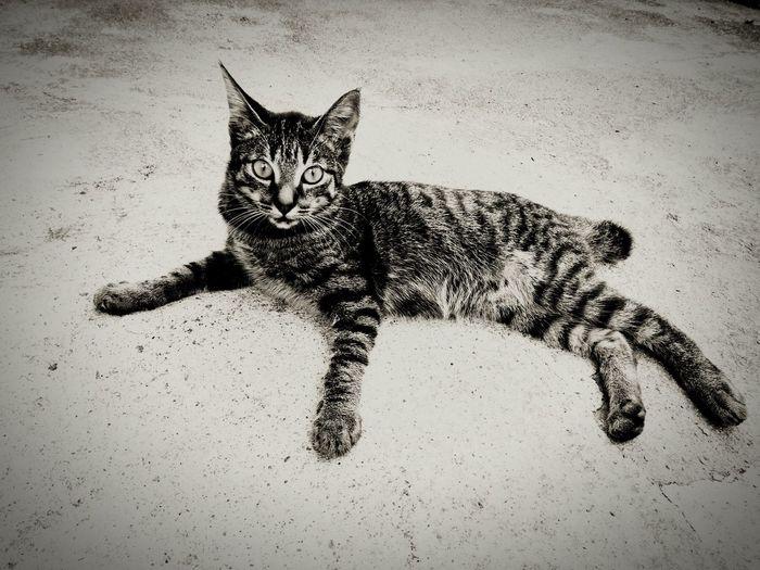 Mycat Mycat❤ Cat♡ Cats Of EyeEm Catlover