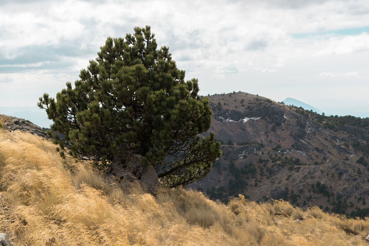 Travel Beauty In Nature Cloud Cloud - Sky Cloudy Day Grass Growth Hill Idyllic Landscape Mountain Nature Non Urban Scene Non-urban Scene Outdoors Plant Remote Rock - Object Rock Formation Scenics Sky Tranquil Scene Tranquility Tree