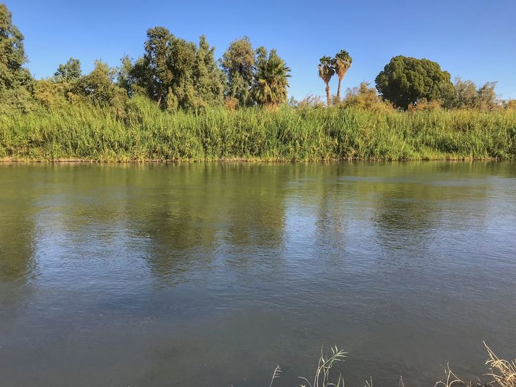 Colorado River flowing calmly along grasses and small trees in Yuma Arizona Colorado River River Tree Nature Lake Water Outdoors Growth Day Grass Sky No People Scenics Tranquility Beauty In Nature Reflection