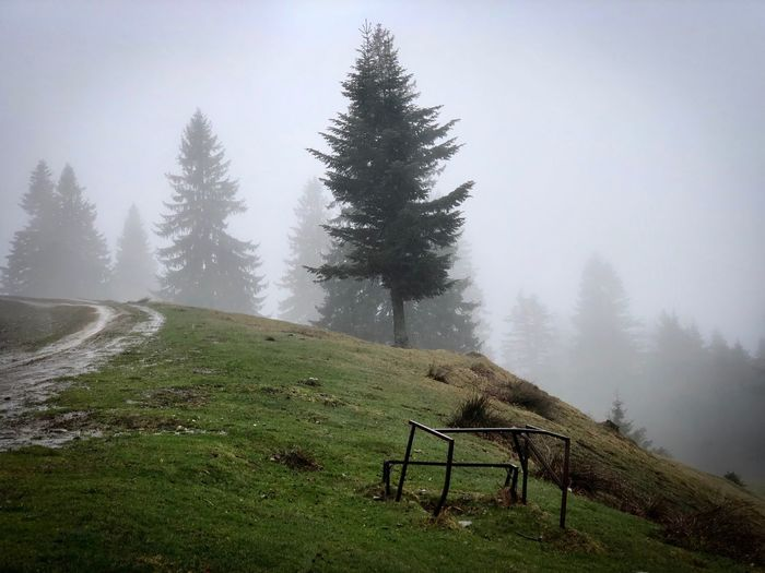 Tree Plant Fog Beauty In Nature Nature Sky Day