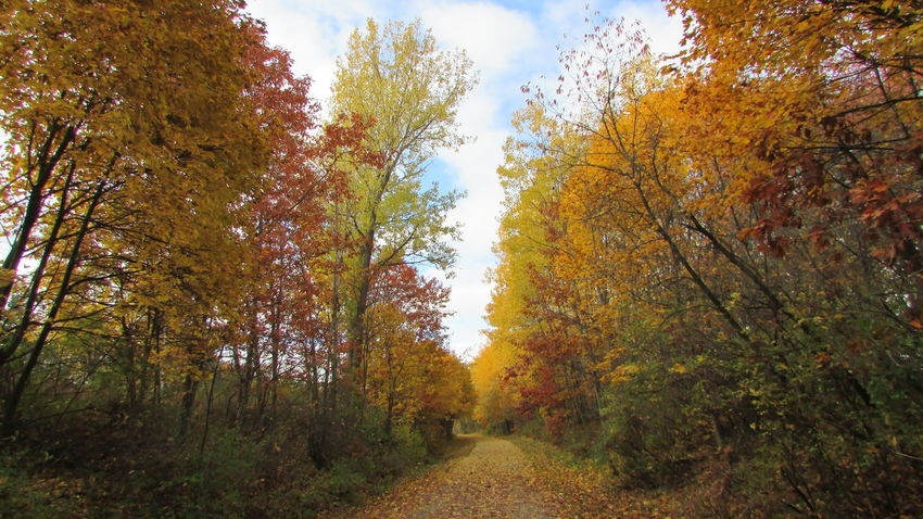 Down The Trail Out For A Walk Autumn Shooting Beautiful View Many Colors Serene White Pine Trail Cadillac Pure Michigan