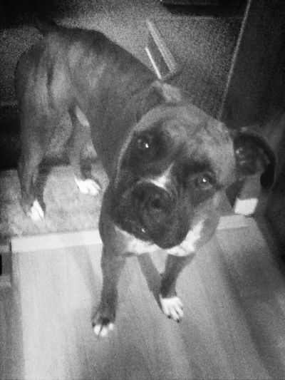 love you baby!!!! Love My Boxer