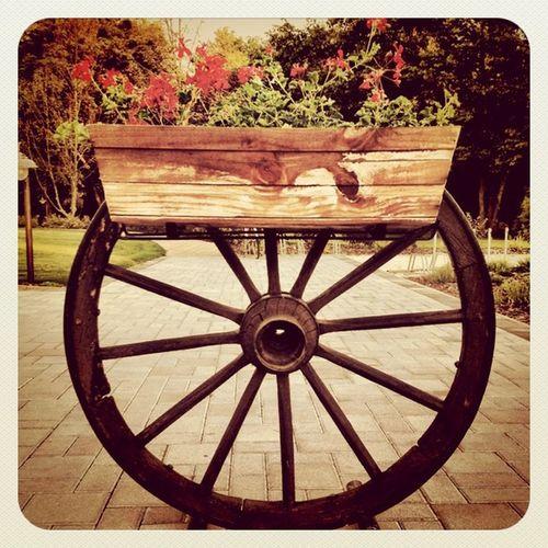 Another country, this time #hungary  #wheel #csarda #flowers #earlybirdlove #jj_forum #jj Flowers Hungary Wheel Jj  Earlybirdlove Jj_forum Alaniskosummer2011_hungary Csarda