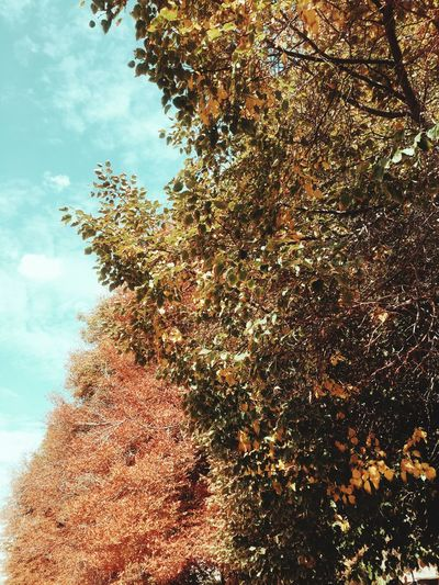 Fall Fall Colors Nature Trees Leaves🌿 Leaves_collection Leaves Tree_collection  Tree Fall Beauty September Nature_collection Nature Photography