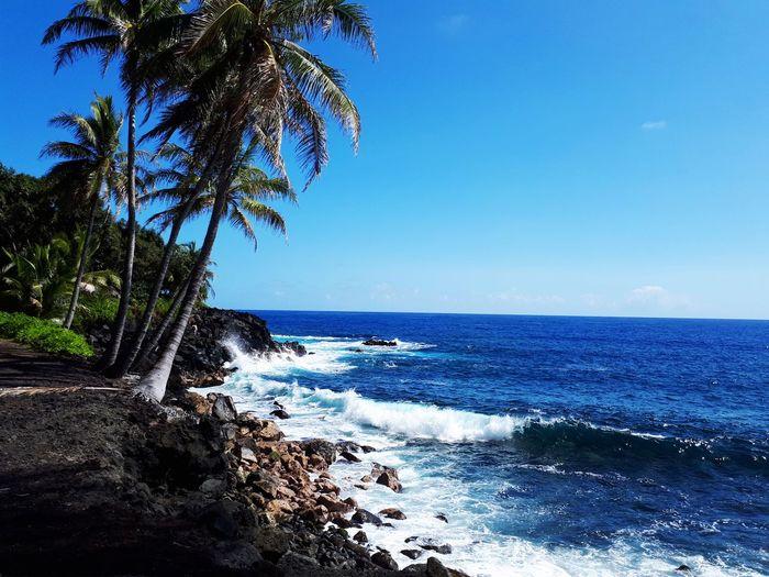 Coconut Cliffs