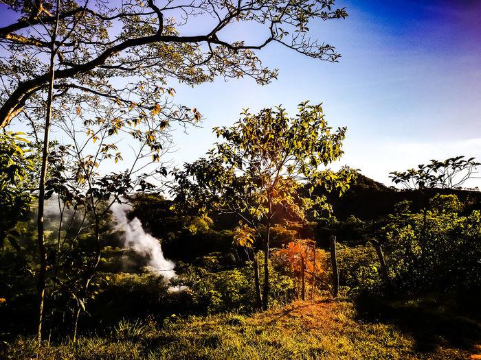 smoke Nature