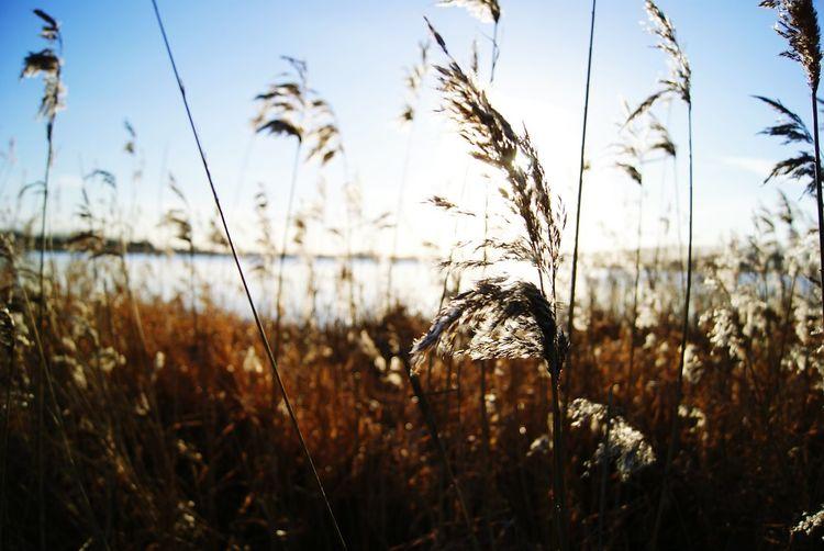 Nature Axel Reeds Sun Natural Light Lakeshore Landscape Wet Wetland Water Naturelovers Nature Photography