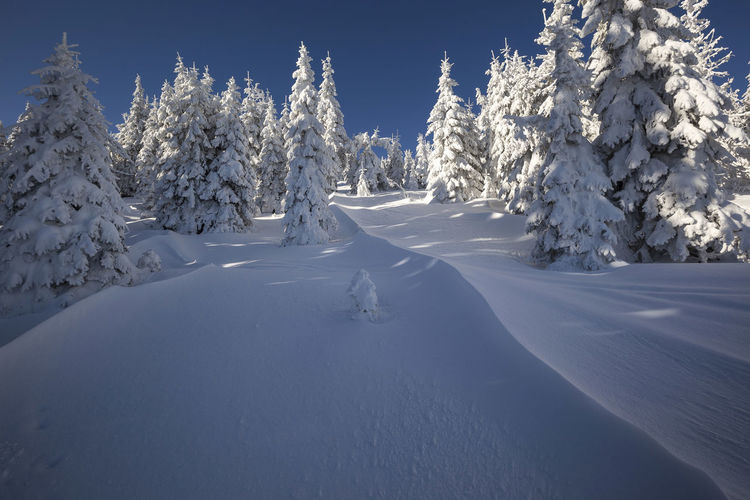 winter in the Apuseni Mountains, Romania Snow ❄ Trees Beauty In Nature Cold Temperature Day Frozen Landscape Mountain Nature No People Outdoors Scenics Sky Snow Tranquil Scene Tranquility Tree Winter