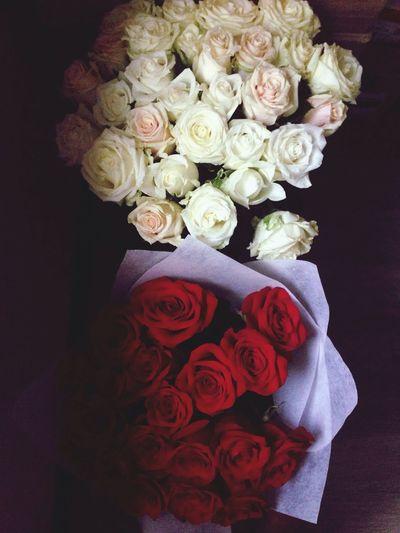 Flower Beauty Beautiful