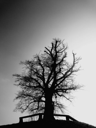 Blackandwhite Tree Plants Beauty In Nature Shadow Beautiful Nature Xperiaphotography Winter End Germany Nature No People Silent Moment Enjoying Life Contrast Conture Sky And Trees Contour Lonely Tree Hilltop Lime Tree Linden Tree