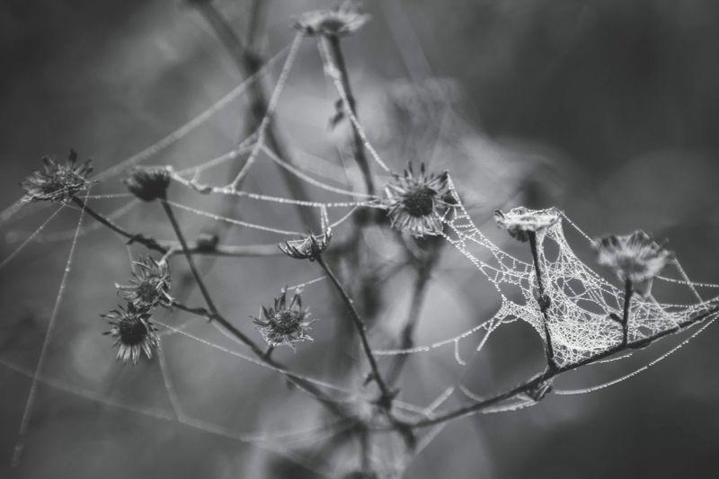 Close-up of cob web on plant