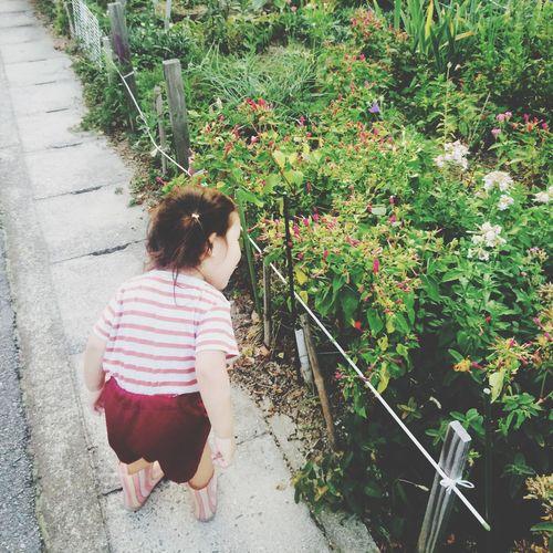 夕方散歩 お花 に あいさつ こんばんは