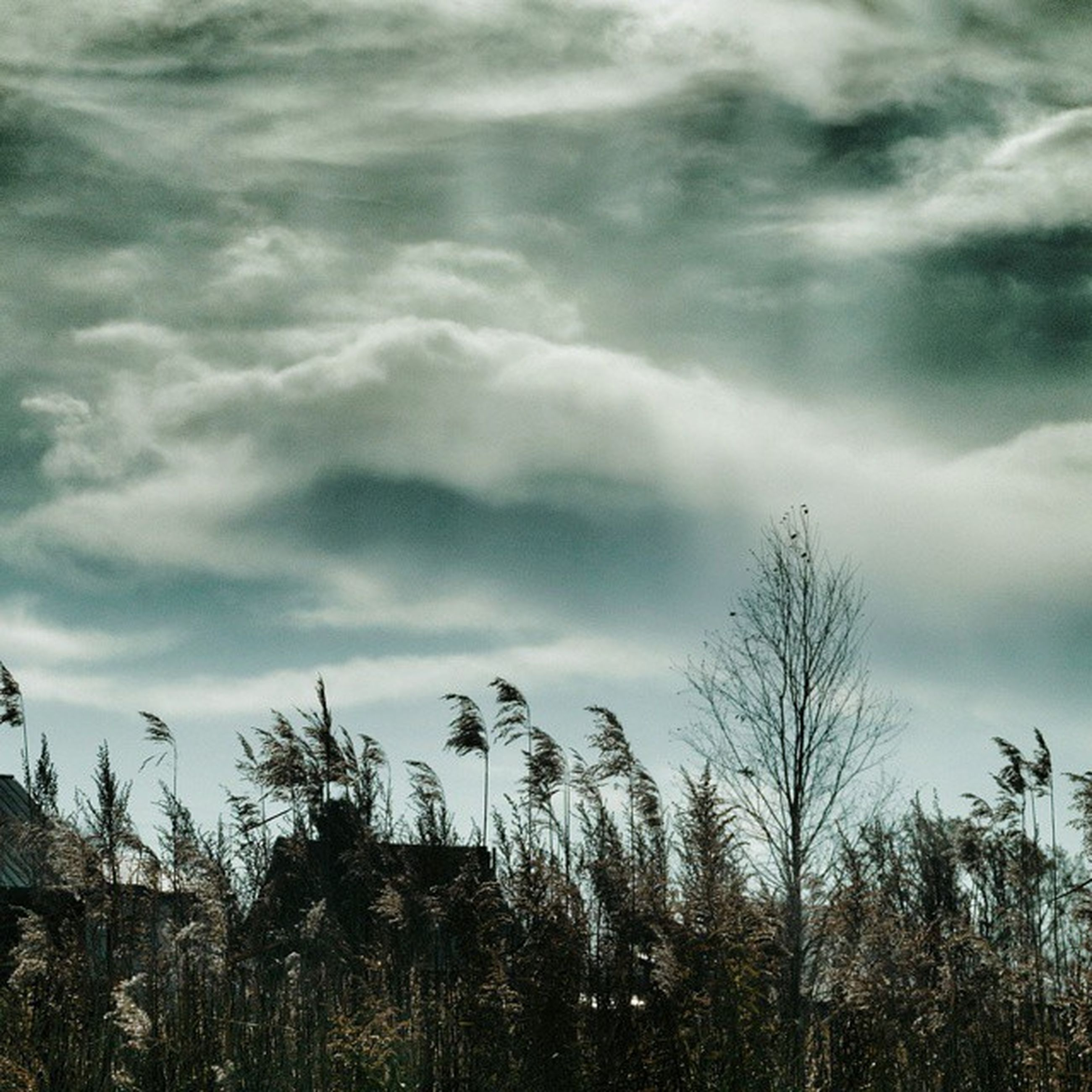 sky, cloud - sky, tranquility, tranquil scene, cloudy, growth, nature, scenics, beauty in nature, cloud, plant, field, grass, landscape, tree, weather, bare tree, outdoors, idyllic, overcast