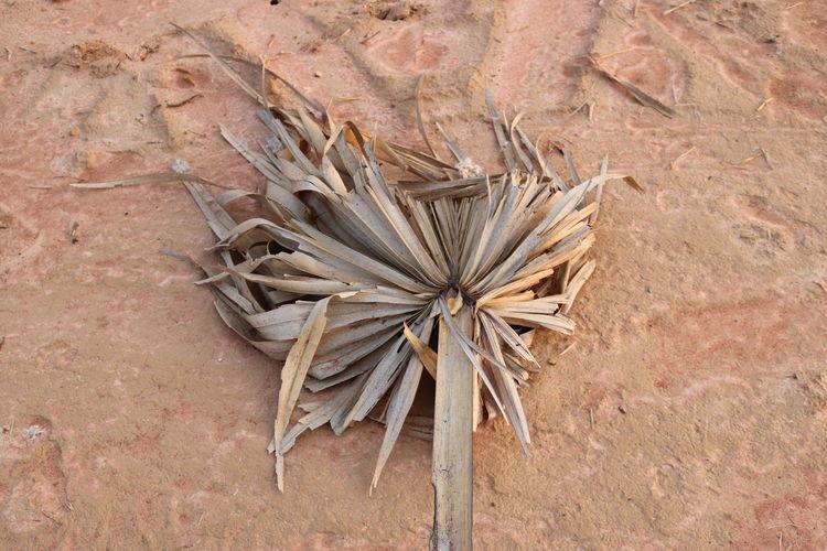 Dry Wood -