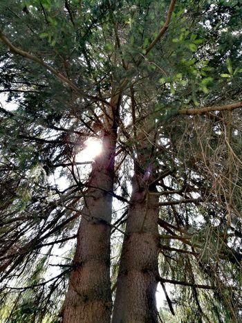 Tree Forest Branch Tree Trunk Sunlight Sky