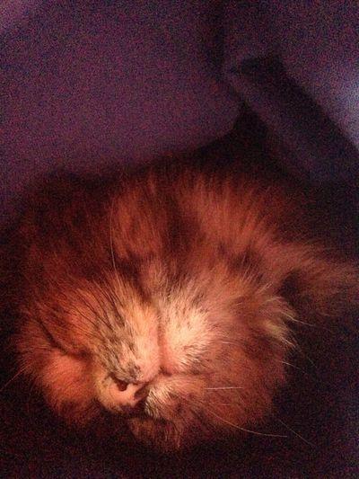 Sleeping Cat Love Cutest