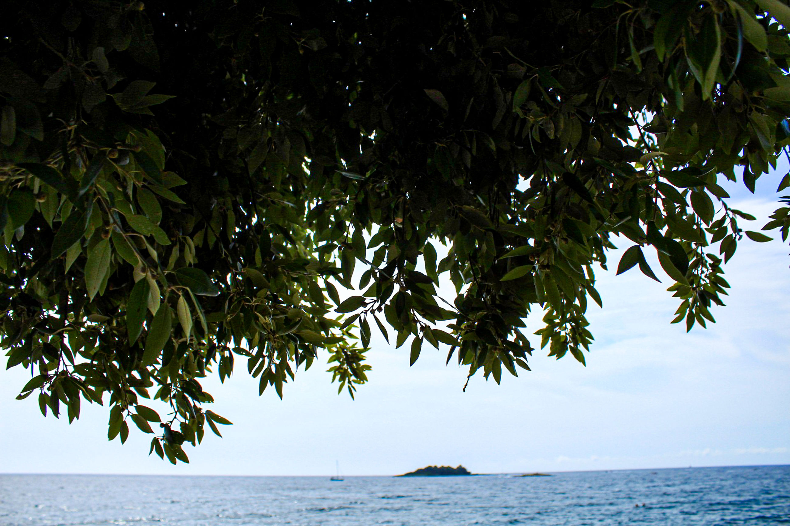 water, sea, tree, plant, beauty in nature, sky, nature, horizon, tranquility, horizon over water, scenics - nature, no people, day, leaf, growth, plant part, tranquil scene, outdoors, land