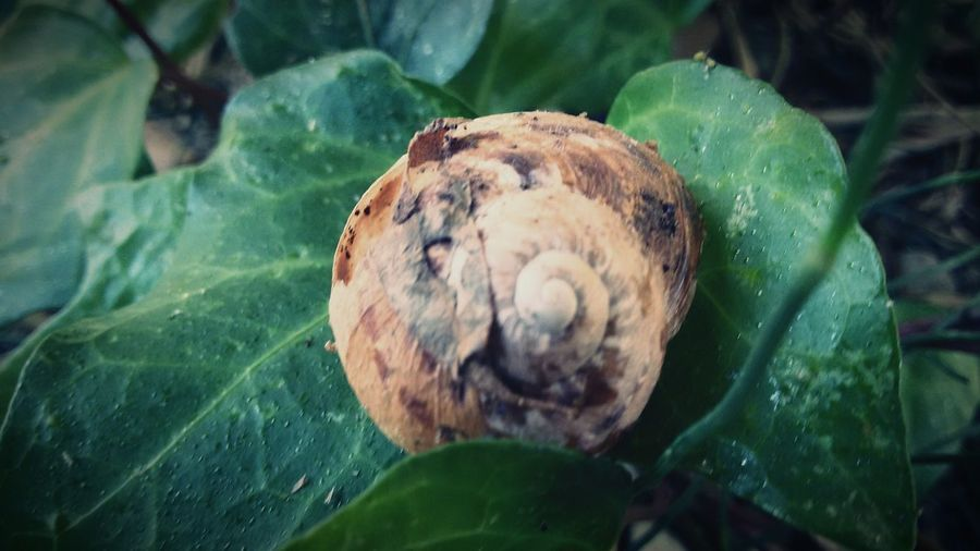 Deceptively Simple Snailfriend EyeEm Gallery Nature_collection Eyem Best Shot - My World Eyeem Market