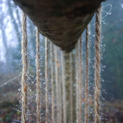 Drops Morning Close-up Focus On Foreground Fog Forest Getting Inspired Nature Outdoors Rope Selective Focus Tree Trunk Water