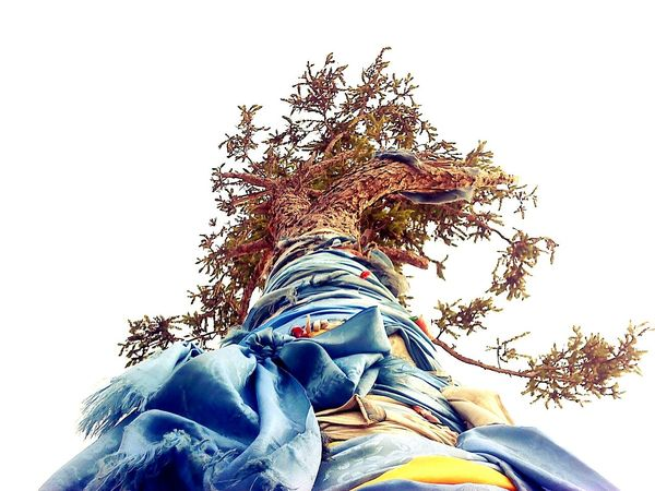 Trees Shamanism Lake Baikal Olhon