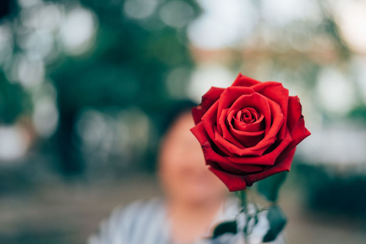 Beauty In Nature Blooming Close-up Day Flower Flower Head Focus On Foreground Fragility Freshness Holding Human Body Part Human Hand Nature One Person Outdoors People Petal Real People Red Rose - Flower Rose Petals
