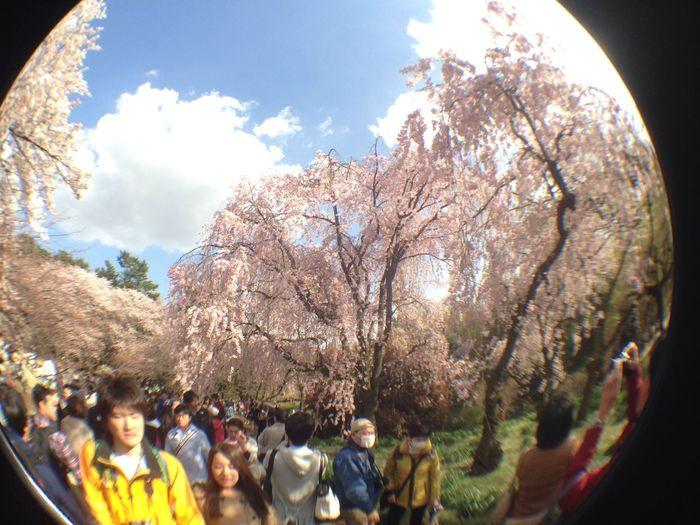 枝垂れ桜がいい感じ EyeEm Tokyo Meetup 3