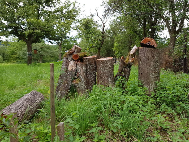 Tree Trunk Rural Scene Trees Personal Perspective Scenics On Tour Things Around Me On Tour With My Handy Art Is Everywhere Card Design Details Of My Life Art Photography Outdoors Landscape Growth Plants Nature Green Color Beauty In Nature Focus On Foreground Grassy Day Grass Apple Trees Garden Gardening