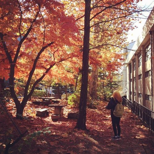 Autumn Redhead South Korea Ewha Womans University Nature Girl Naturelovers Beauty In Nature Floral Leaves Nature_collection Autumn Leaves October October Sweet October!
