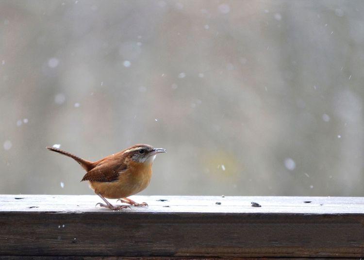 Bird perching on wood in snow