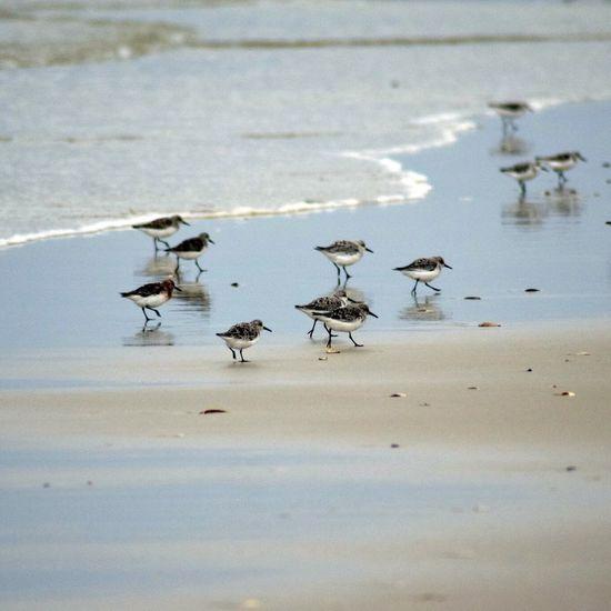 Island Beach State Park Newjersey Sandpiper Ocean Nature Taking Photos