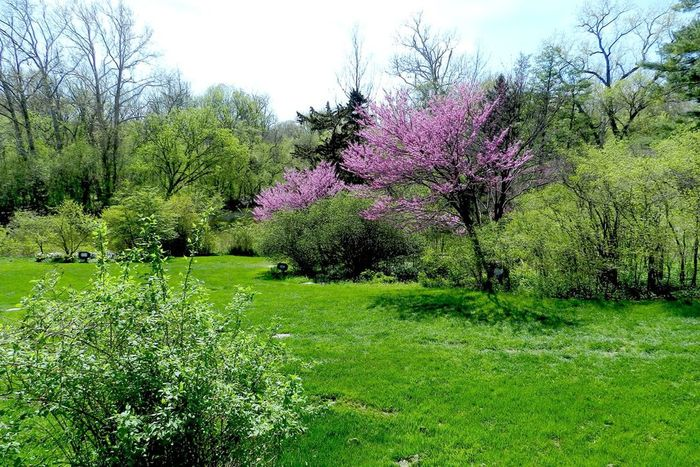 Splash of Pink Beauty In Nature Field Flower Grass Green Green Color In Bloom Landscape Lush Foliage Outdoors Pink Color Scenics Tranquility Tree Pink Green Green Green!  Greenery Flowering Tree Dearborn Michigan Henry Ford Estate Courtyard  Yard Scenery The Great Outdoors - 2016 EyeEm Awards